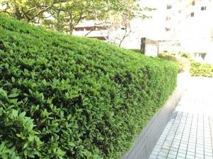 3.fukuoka.jpg